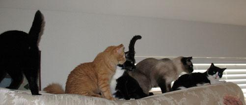 catsonmattress.jpg